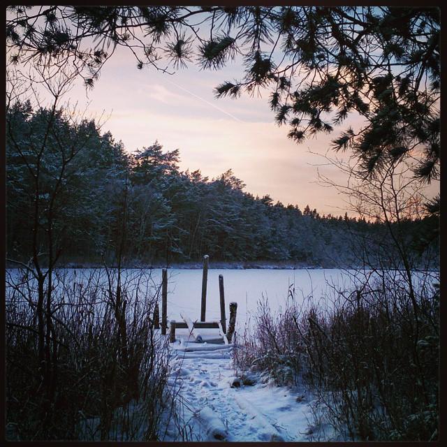Projekt #dagligpromenad har verkligen fått fart den här julen. Idag #Käringsjön. Mer göl än sjö kanske men fint ändå. #Täby #sjöslingan #sjö #lake #Sweden #trasigbrygga #tall