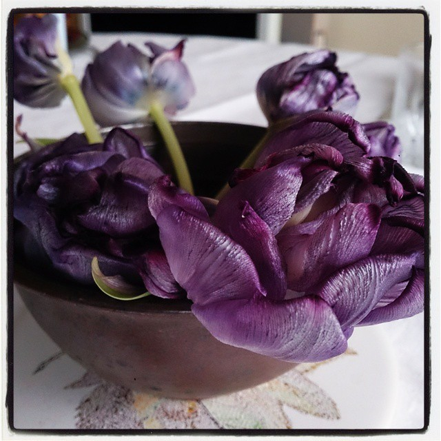 Önskar alla en trevlig och frisk fredag! #lilatulpan #vissnadskönhet