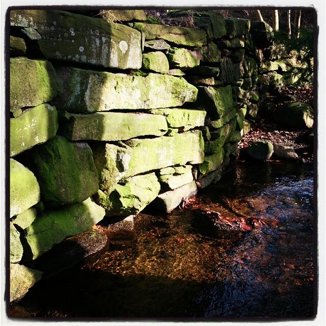 Eftermiddagsljuset på den här gröna stenmuren fastnade jag för under dagens promenad. Andra dagen i rad. #lackarebäcksravinen #stenmur #MölndalsPosten #molndalsposten #mölndal