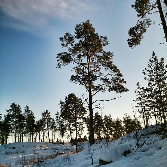 Firar alla spännande tävlingar i dagens Vinterstudion med en snöig arkivbild. #dagensträd #enannantall #Täby