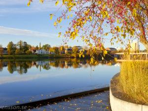 Bilderna som får alla att kasta sig iväg till Umeå?