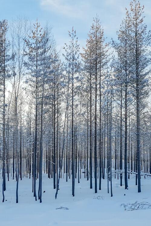 Bränd skog Hälsingland 2019
