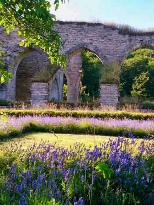 klosterruin och lavendel